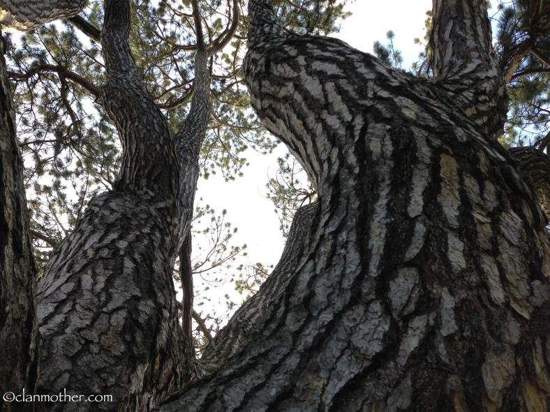 J.R.R. Tolkien's Black Pine