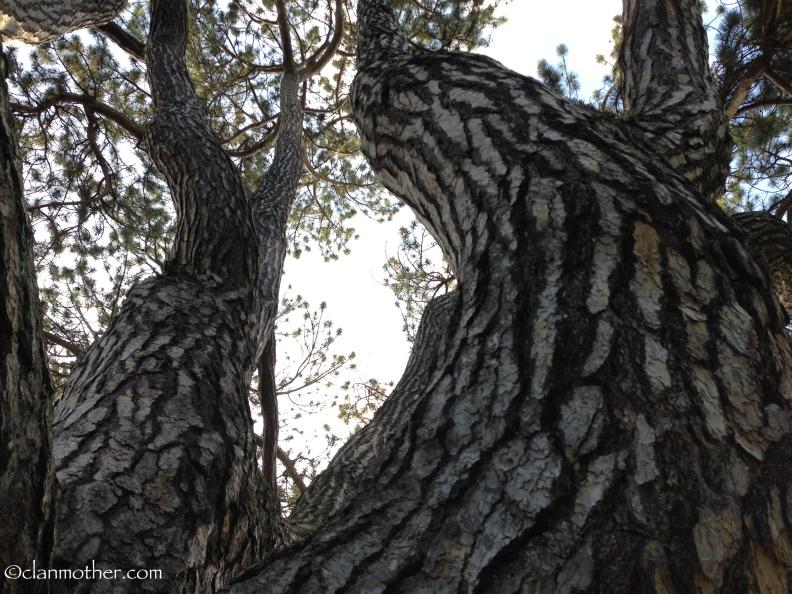 The Tolkien Tree